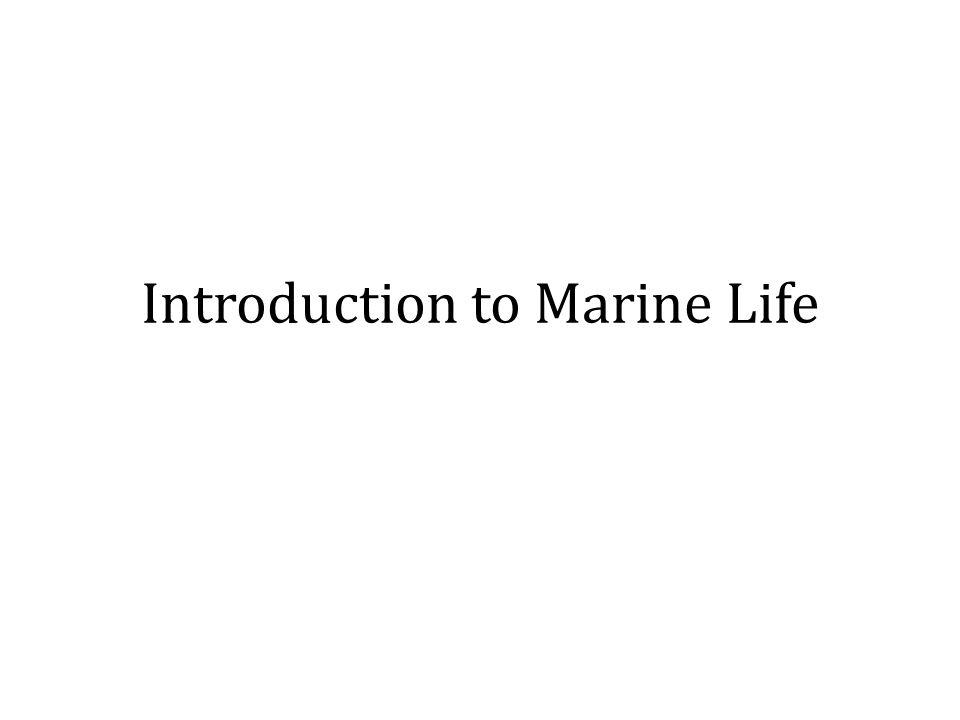 Lifestyles of Marine Orgs Planktonic Nekton Benthic