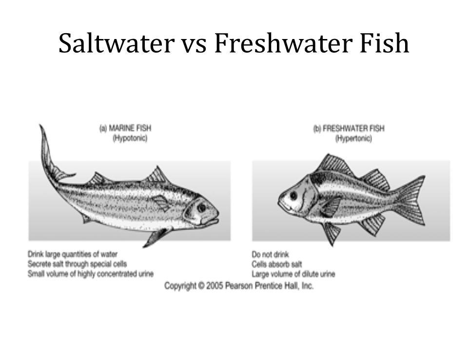 Saltwater vs Freshwater Fish