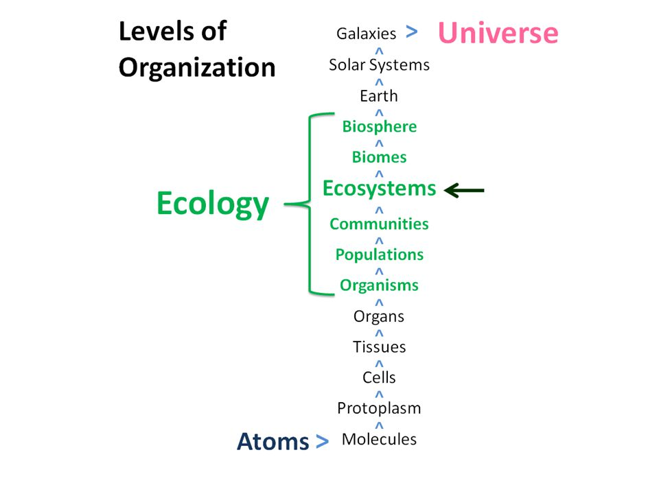 OTHER FOOD ROLES Decomposers… break down food and nutrients left over from predation or in dead orgs or waste Omnivores…feed on consumers and producers Microbial loop…bacteria help make available even smaller nutrients called DOM (dissolved organic matter) that would otherwise be lost