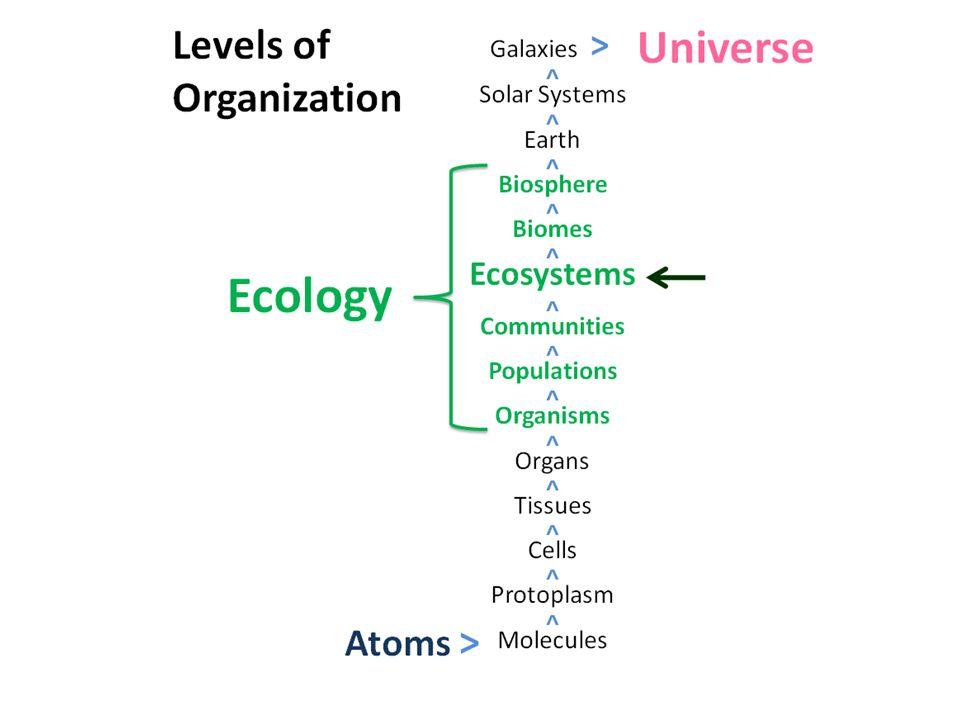 Types of Plankton Holoplankton –Entire lives as plankton –Ex.