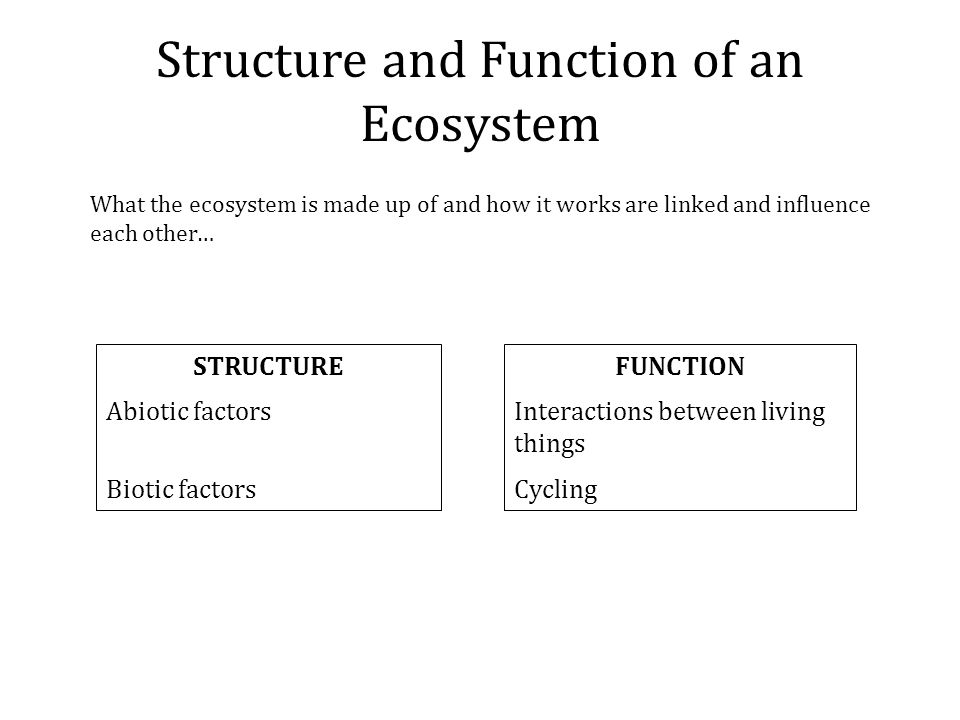 Structure and Function of an Ecosystem What the ecosystem is made up of and how it works are linked and influence each other… STRUCTURE Abiotic factors Biotic factors FUNCTION Interactions between living things Cycling