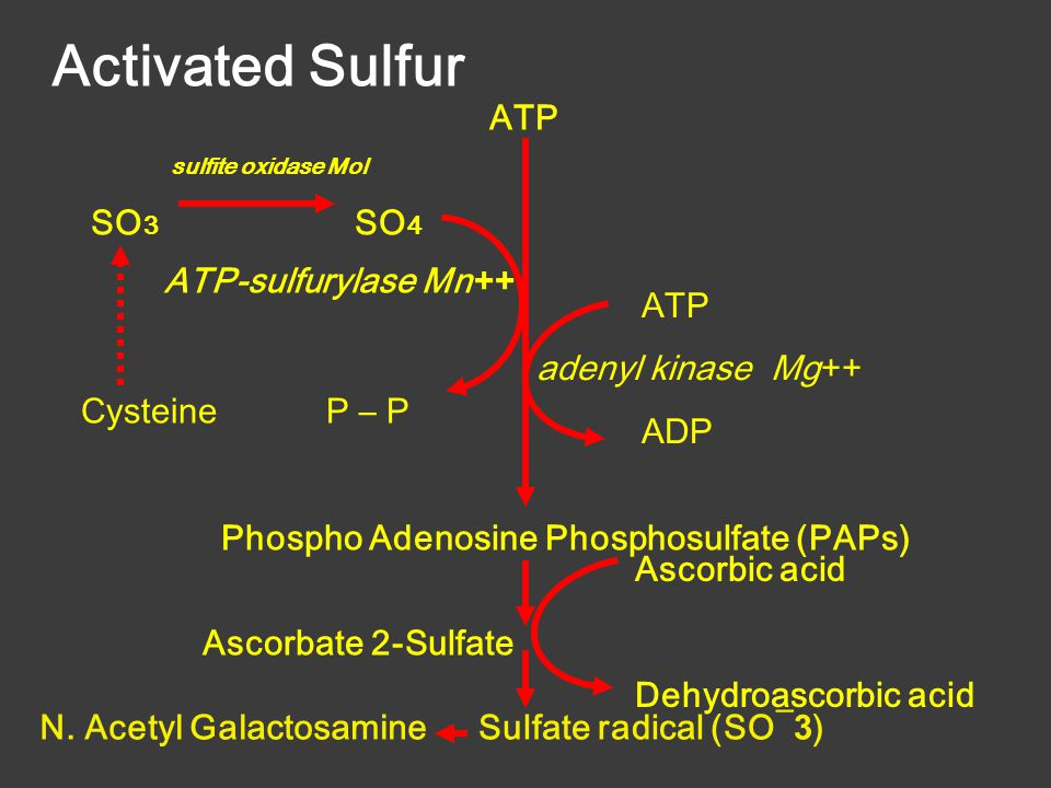 ATP adenyl kinase Mg ++ ADP ATP sulfite oxidase Mol SO 3 SO 4 CysteineP – P Phospho Adenosine Phosphosulfate (PAPs) Ascorbate 2-Sulfate ATP-sulfurylase Mn ++ Sulfate radical (SO¯ 3 ) Ascorbic acid Dehydroascorbic acid N.