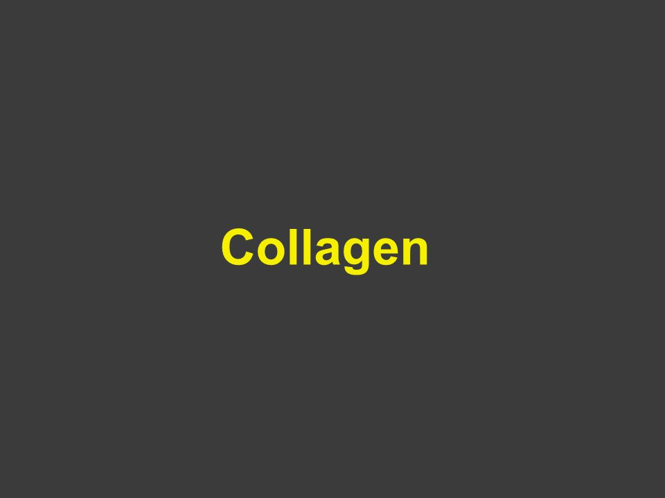 COLLAGEN TYPE 1Most connective tissues including skin, blood vessels, cornea, bone, ligaments and tendons.