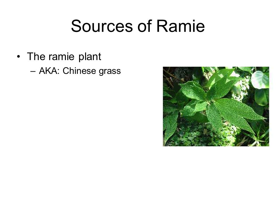 Sources of Ramie The ramie plant –AKA: Chinese grass