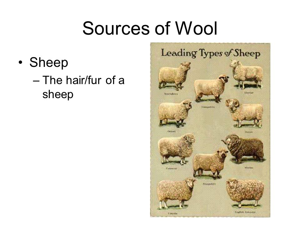 Sources of Wool Sheep –The hair/fur of a sheep