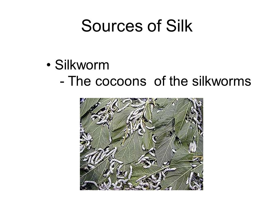 Sources of Silk Silkworm - The cocoons of the silkworms