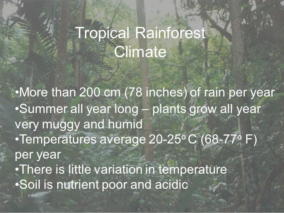 Tropical Rainforest Climate More than 200 cm (78 inches) of rain per year Summer all year long – plants grow all year very muggy and humid Temperatures average 20-25 o C (68-77 o F) per year There is little variation in temperature Soil is nutrient poor and acidic