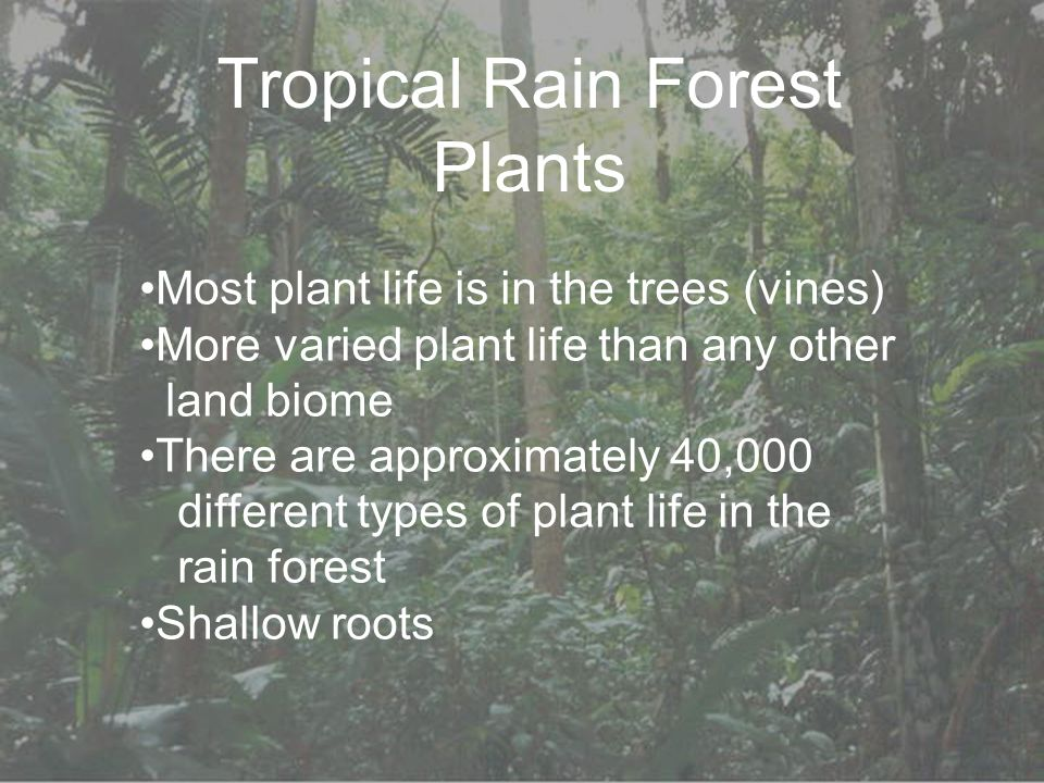 Tropical Rain Forest Plants Most plant life is in the trees (vines) More varied plant life than any other land biome There are approximately 40,000 different types of plant life in the rain forest Shallow roots