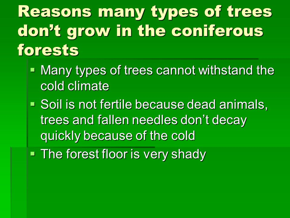 Reasons many types of trees don't grow in the coniferous forests  Many types of trees cannot withstand the cold climate  Soil is not fertile because dead animals, trees and fallen needles don't decay quickly because of the cold  The forest floor is very shady