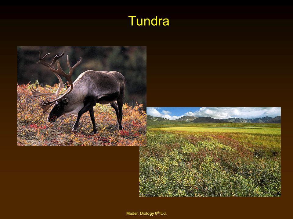 Mader: Biology 8 th Ed. Tundra