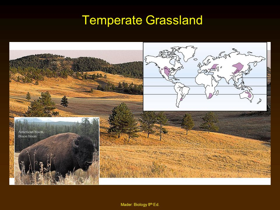 Mader: Biology 8 th Ed. Temperate Grassland