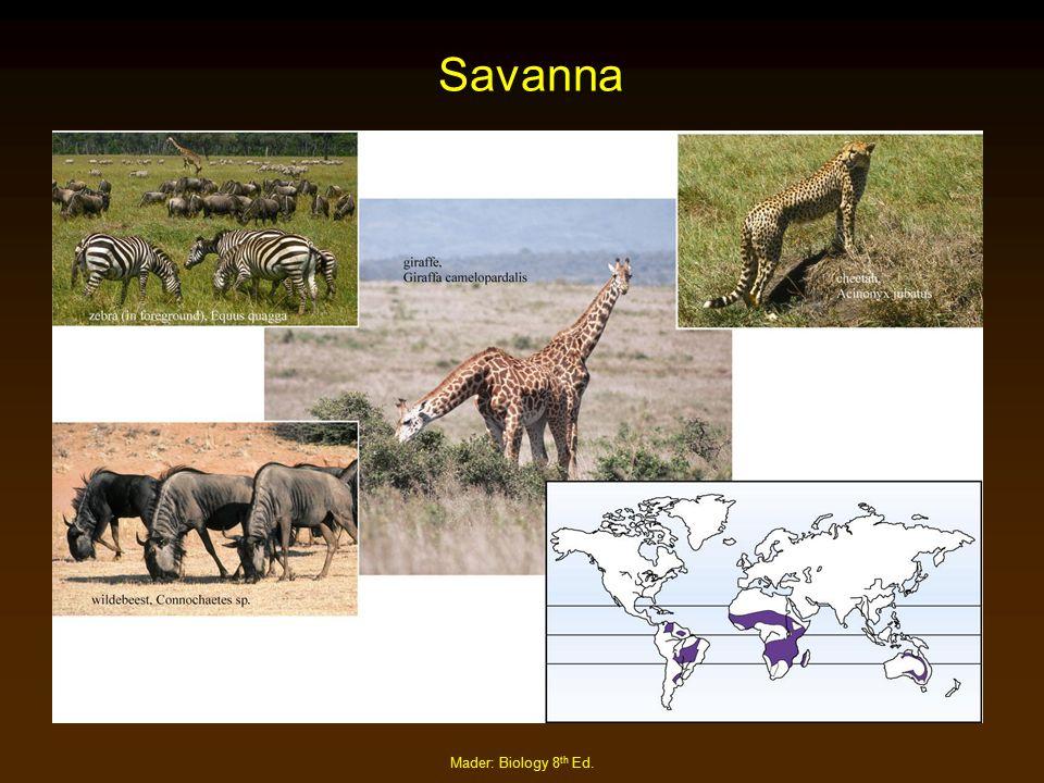Mader: Biology 8 th Ed. Savanna