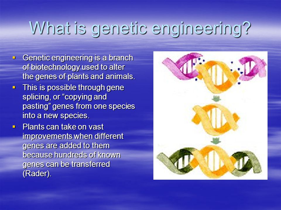 What is genetic engineering?  Genetic engineering is a branch of biotechnology used to alter the genes of plants and animals.  This is possible thro