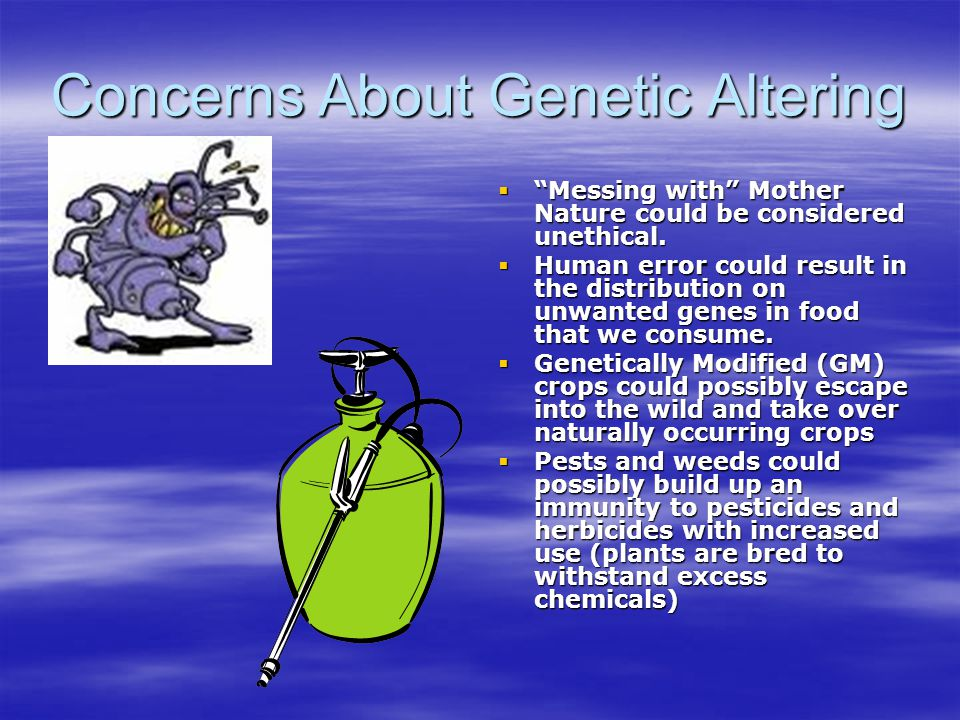 """Concerns About Genetic Altering  """"Messing with"""" Mother Nature could be considered unethical.  Human error could result in the distribution on unwant"""