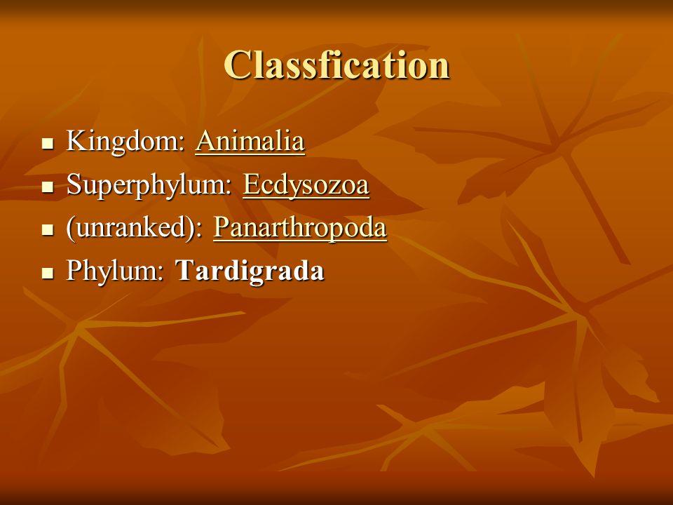 Classfication Kingdom: Animalia Kingdom: AnimaliaAnimalia Superphylum: Ecdysozoa Superphylum: EcdysozoaEcdysozoa (unranked): Panarthropoda (unranked): PanarthropodaPanarthropoda Phylum: Tardigrada Phylum: Tardigrada