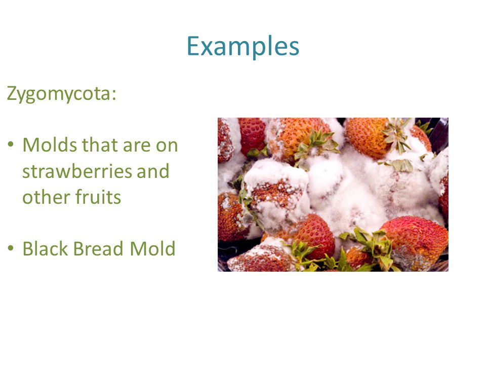 Examples Zygomycota: Molds that are on strawberries and other fruits Black Bread Mold