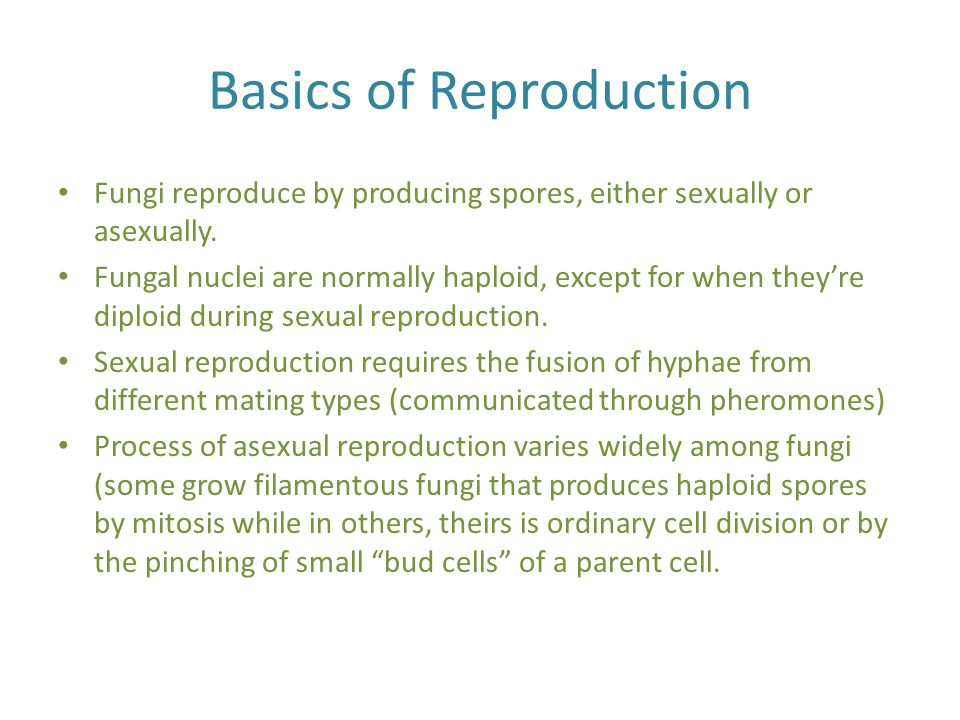 Basics of Reproduction Fungi reproduce by producing spores, either sexually or asexually. Fungal nuclei are normally haploid, except for when they're