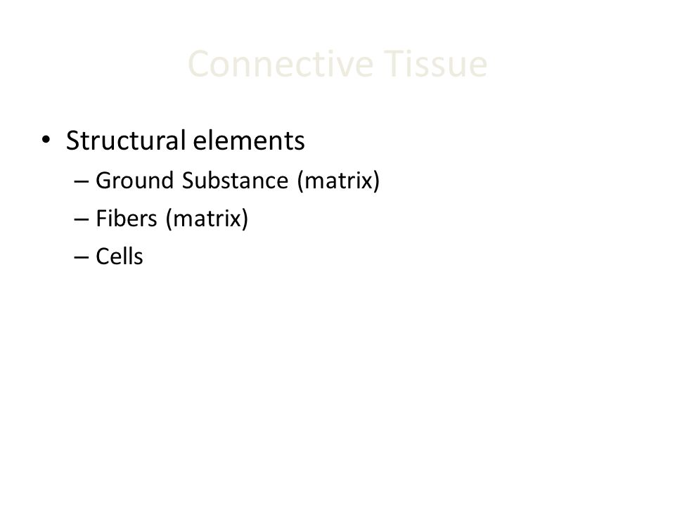 Connective Tissue Structural elements – Ground Substance (matrix) – Fibers (matrix) – Cells