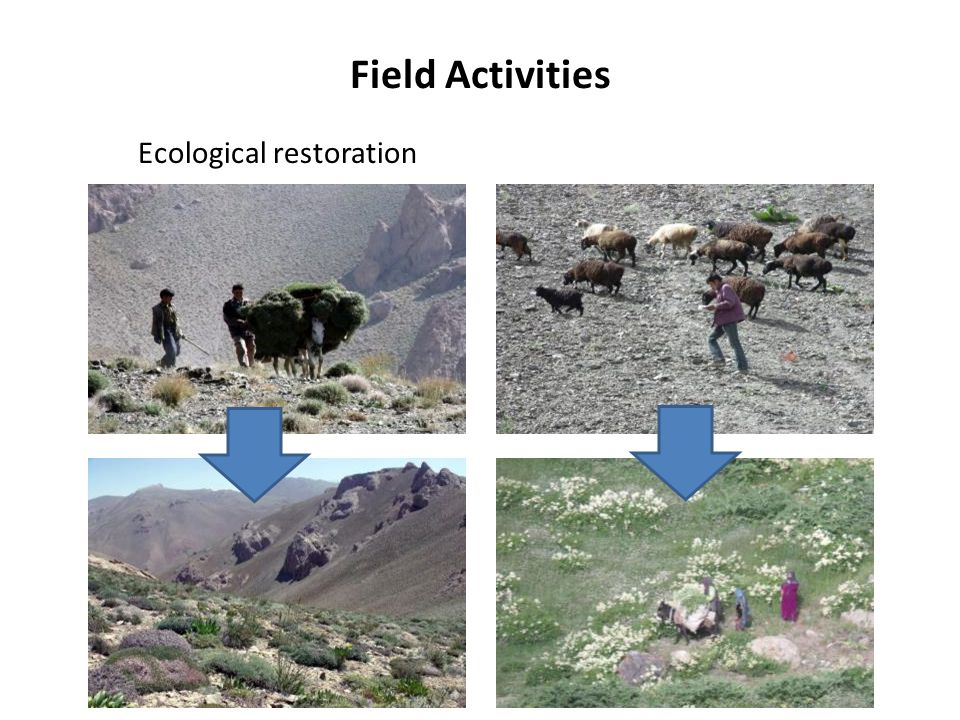 Field Activities Ecological restoration