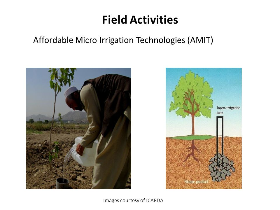 Field Activities Images courtesy of ICARDA Affordable Micro Irrigation Technologies (AMIT)