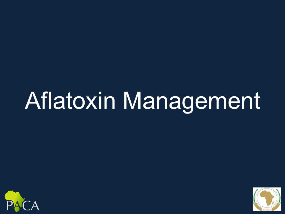 Aflatoxin Management