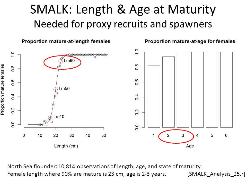 SMALK: Length & Age at Maturity Needed for proxy recruits and spawners North Sea flounder: 10,814 observations of length, age, and state of maturity.