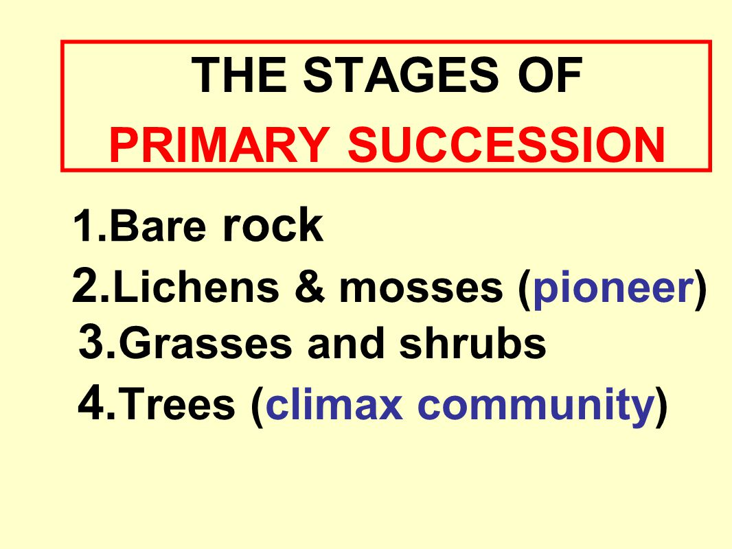 2. Lichens & mosses (pioneer) 3. Grasses and shrubs 4. Trees (climax community) 1.Bare rock THE STAGES OF PRIMARY SUCCESSION