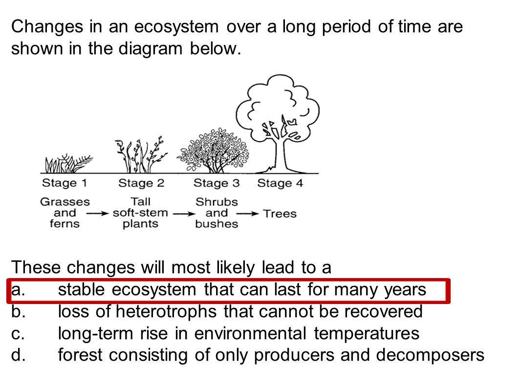 Changes in an ecosystem over a long period of time are shown in the diagram below. These changes will most likely lead to a a. stable ecosystem that c