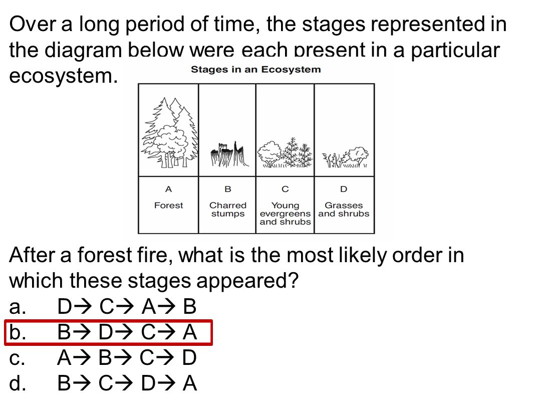 Over a long period of time, the stages represented in the diagram below were each present in a particular ecosystem. After a forest fire, what is the