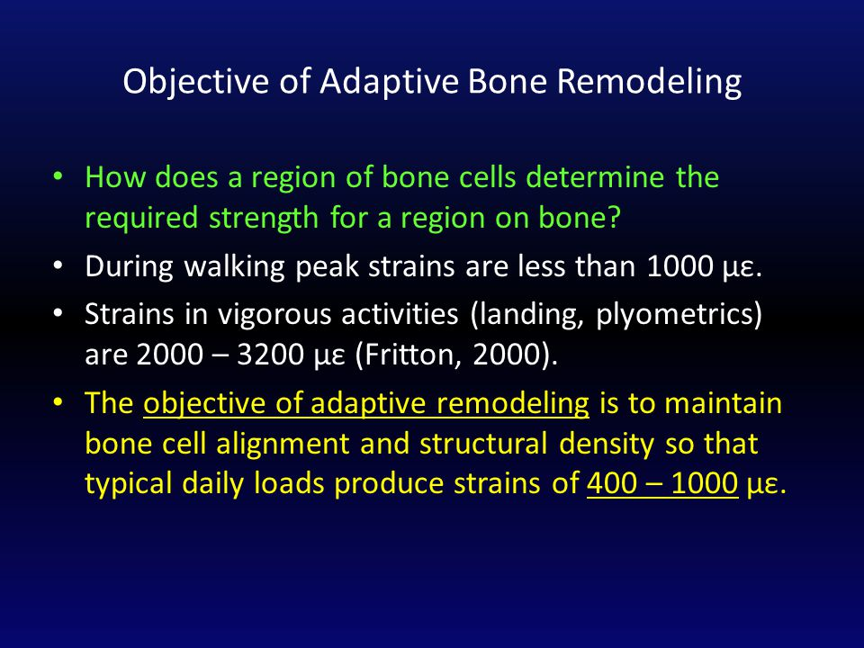 Objective of Adaptive Bone Remodeling How does a region of bone cells determine the required strength for a region on bone.
