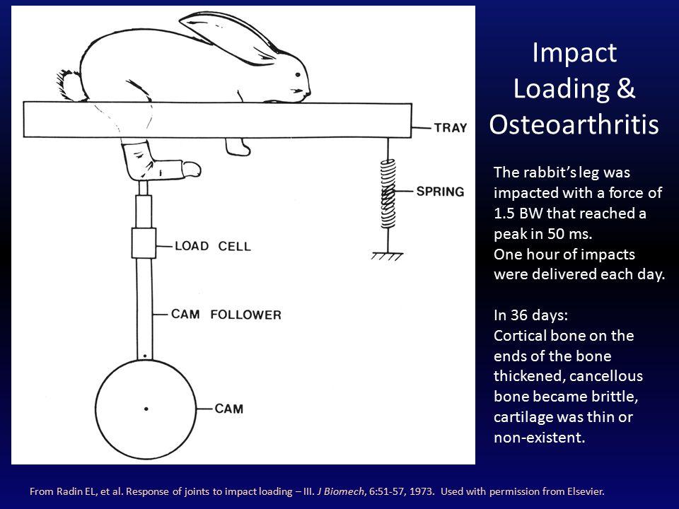 Impact Loading & Osteoarthritis From Radin EL, et al.