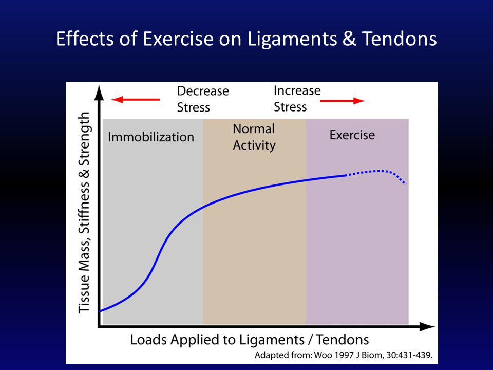 Effects of Exercise on Ligaments & Tendons