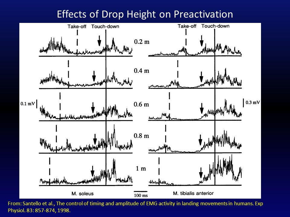 Effects of Drop Height on Preactivation From: Santello et al., The control of timing and amplitude of EMG activity in landing movements in humans.