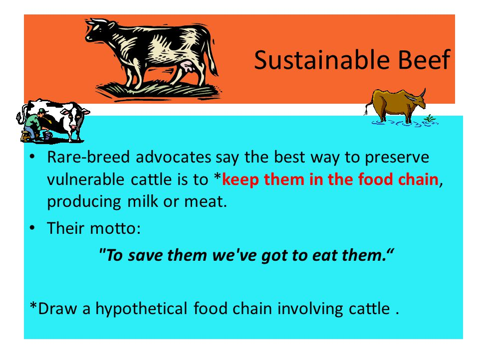 Sustainable Beef Rare-breed advocates say the best way to preserve vulnerable cattle is to *keep them in the food chain, producing milk or meat.