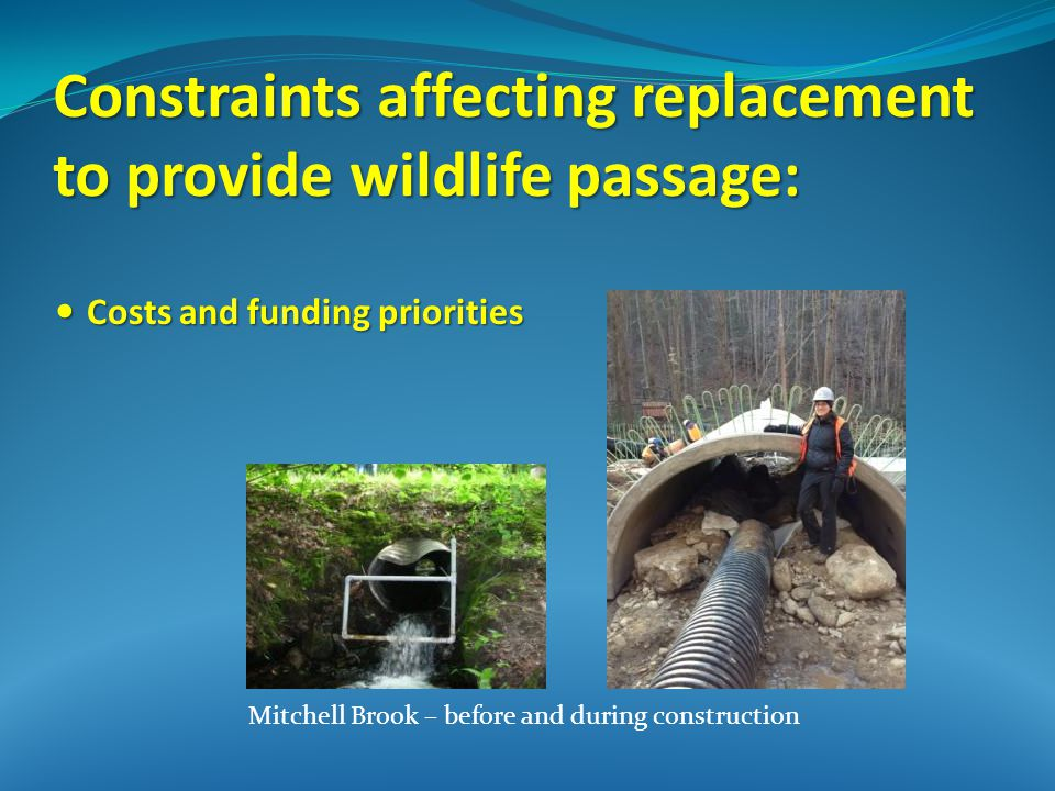 Constraints affecting replacement to provide wildlife passage: Costs and funding priorities Costs and funding priorities Mitchell Brook – before and during construction