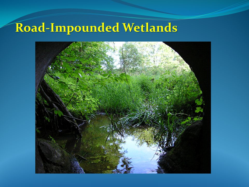 Road-Impounded Wetlands