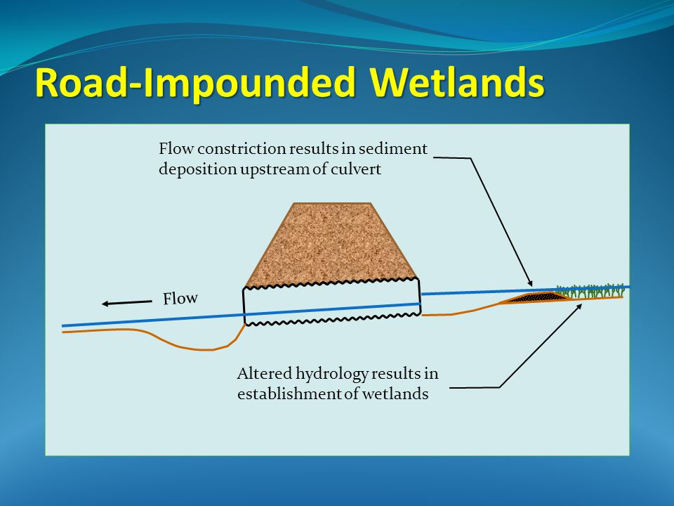 Flow Altered hydrology results in establishment of wetlands Flow constriction results in sediment deposition upstream of culvert