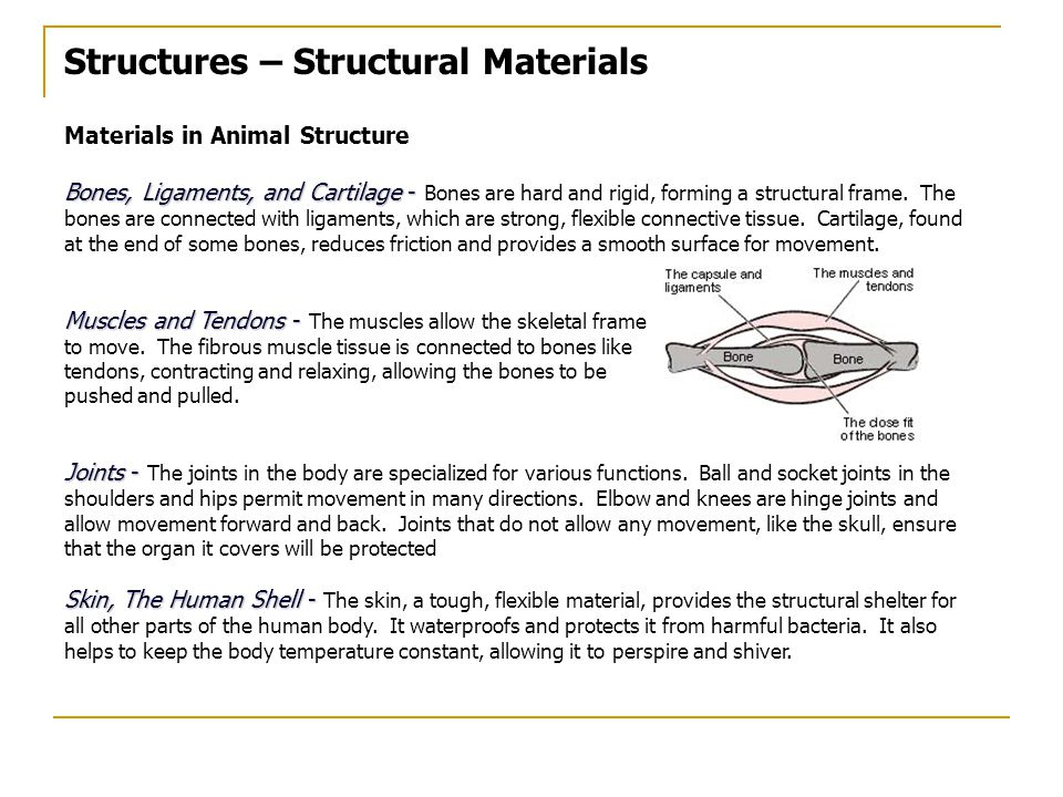 Structures – Structural Materials Materials in Animal Structure Bones, Ligaments, and Cartilage - Bones, Ligaments, and Cartilage - Bones are hard and rigid, forming a structural frame.