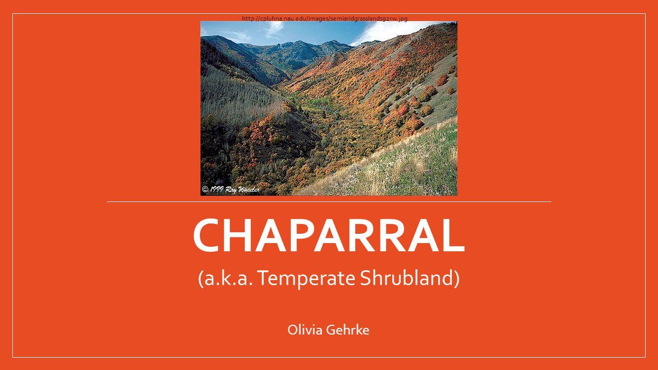 CHAPARRAL (a.k.a. Temperate Shrubland) Olivia Gehrke http://cpluhna.nau.edu/images/semiaridgrasslands92rw.jpg