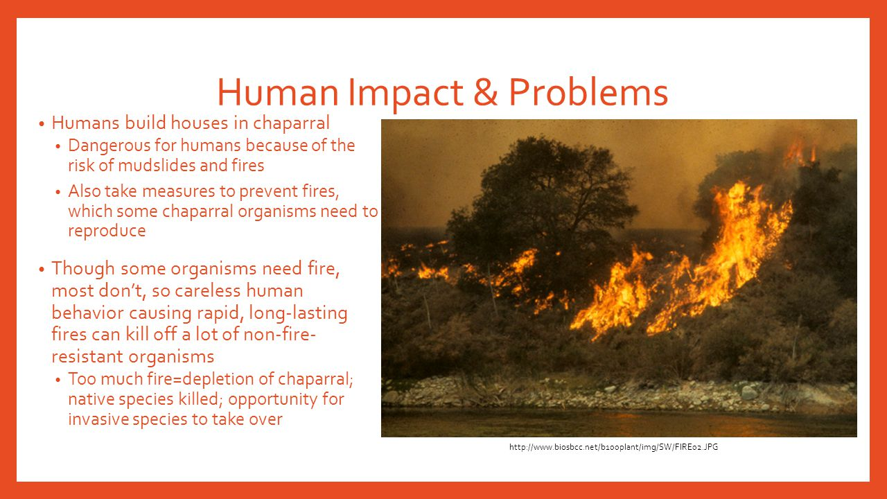 Human Impact & Problems Humans build houses in chaparral Dangerous for humans because of the risk of mudslides and fires Also take measures to prevent