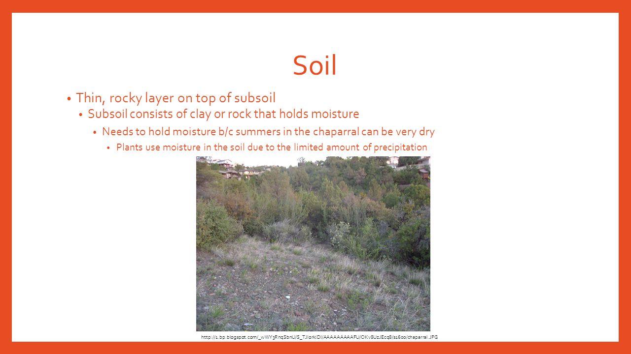 Dominant Plants Blue oak Coyote brush Common sagebrush manzanita http://www.igoterra.com/photo/999/012115.JPG http://ucanr.edu/sites/scmg/files/30291display.jpg