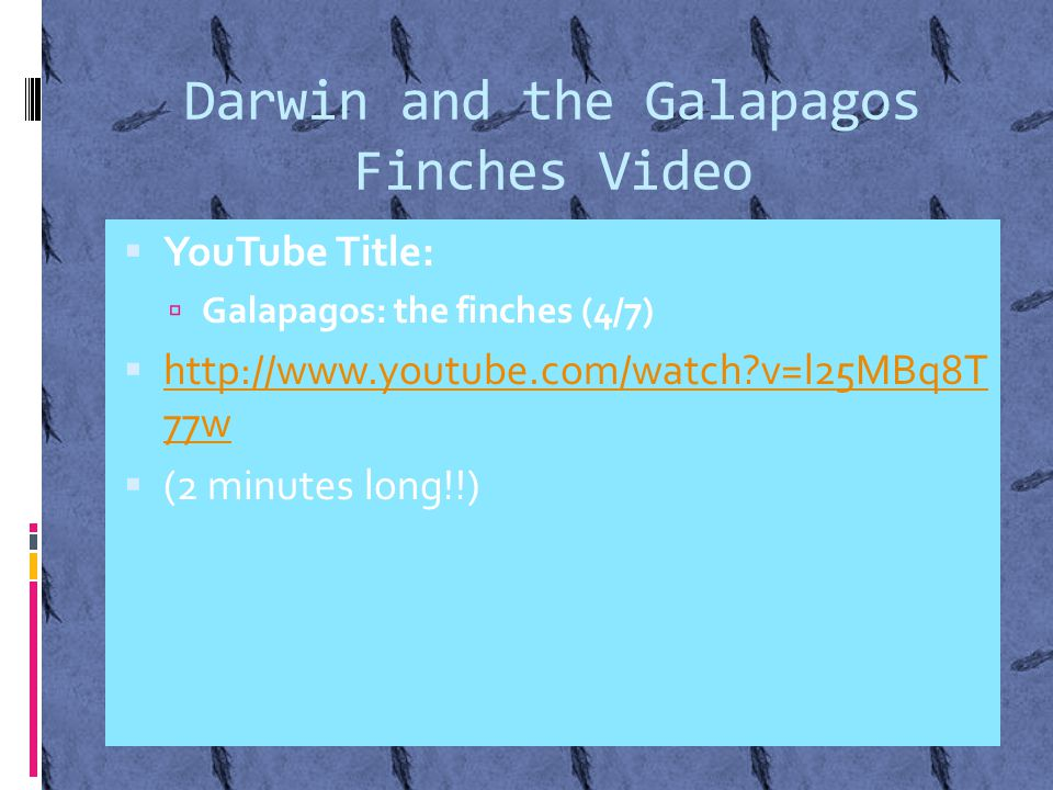 Darwin and the Galapagos Finches Video  YouTube Title:  Galapagos: the finches (4/7)  http://www.youtube.com/watch v=l25MBq8T 77w http://www.youtube.com/watch v=l25MBq8T 77w  (2 minutes long!!)