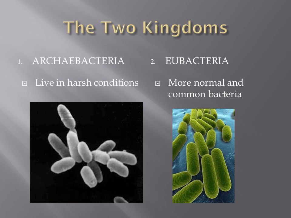 1. ARCHAEBACTERIA 2. EUBACTERIA  Live in harsh conditions  More normal and common bacteria