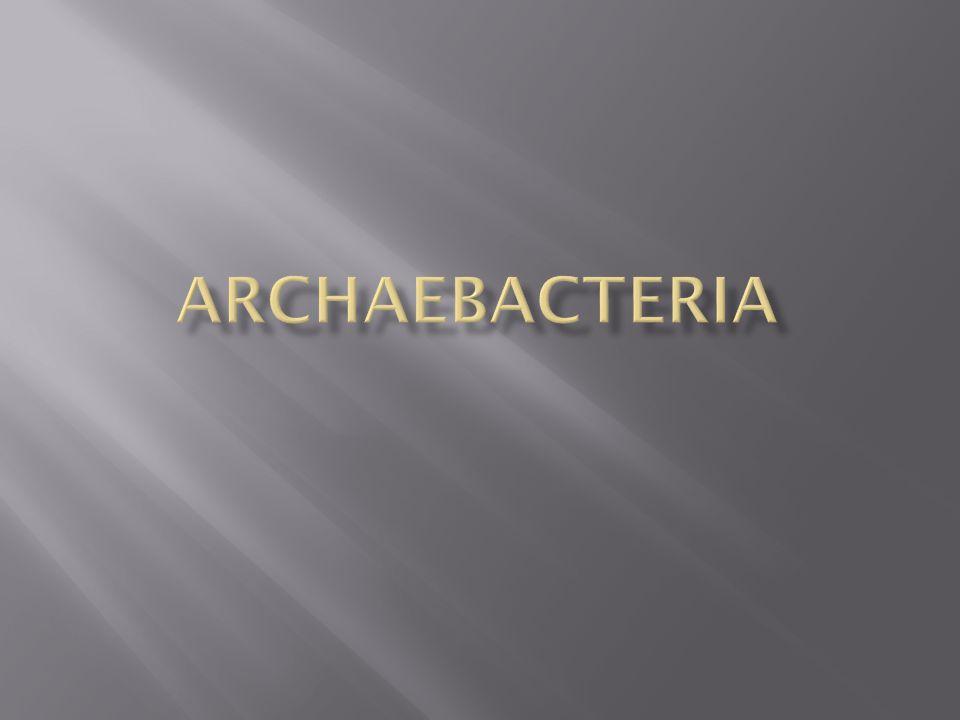 Archaebacteria are prokaryotes.