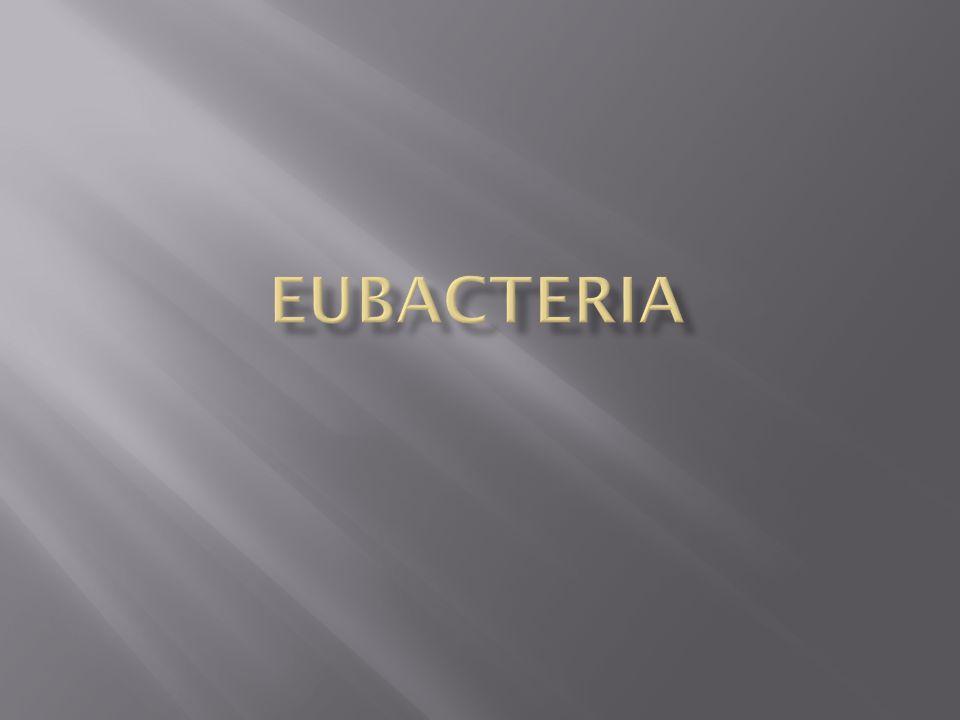  Eubacteria are also prokaryotes.