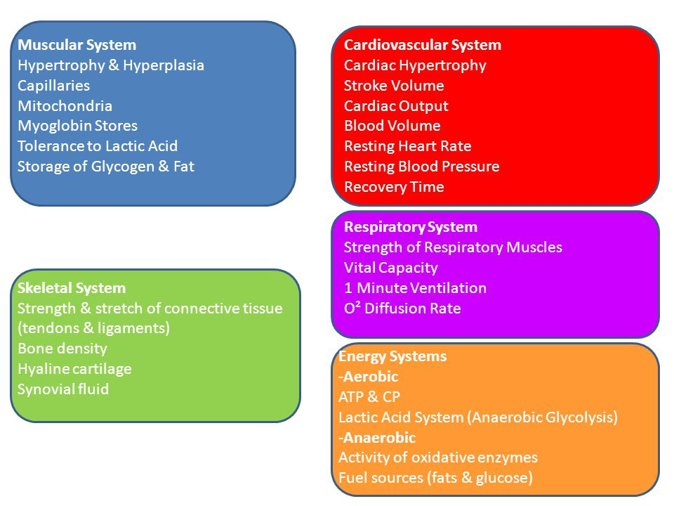 Muscular System Hypertrophy & Hyperplasia Capillaries Mitochondria Myoglobin Stores Tolerance to Lactic Acid Storage of Glycogen & Fat Skeletal System Strength & stretch of connective tissue (tendons & ligaments) Bone density Hyaline cartilage Synovial fluid Cardiovascular System Cardiac Hypertrophy Stroke Volume Cardiac Output Blood Volume Resting Heart Rate Resting Blood Pressure Recovery Time Respiratory System Strength of Respiratory Muscles Vital Capacity 1 Minute Ventilation O² Diffusion Rate Energy Systems -Aerobic ATP & CP Lactic Acid System (Anaerobic Glycolysis) -Anaerobic Activity of oxidative enzymes Fuel sources (fats & glucose)