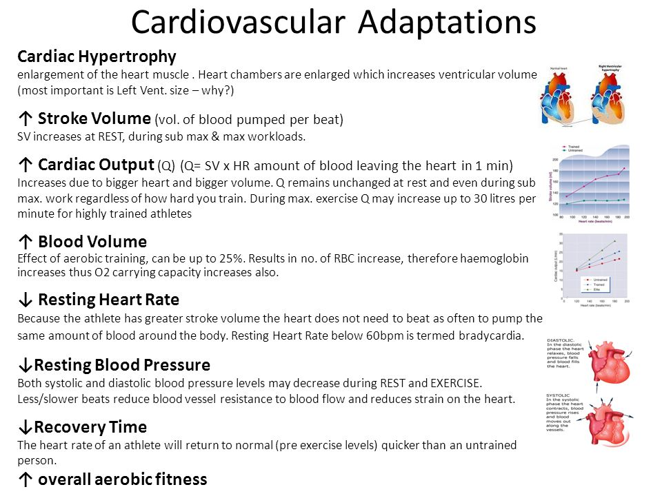 Respiratory Adaptations ↑ Strength of Respiratory Muscles increased strength of respiratory muscles such as: Diaphragm Inter costal musclesRhomboids Sternocleidomastoid This will further expand the thoracic cavity creating a bigger volume (= more O²) ↑ Vital Capacity As a result of increased number of alveoli activated & capillarisation around those alveoli ↑ 1 Minute Ventilation the total volume of gas entering the lungs per minute.
