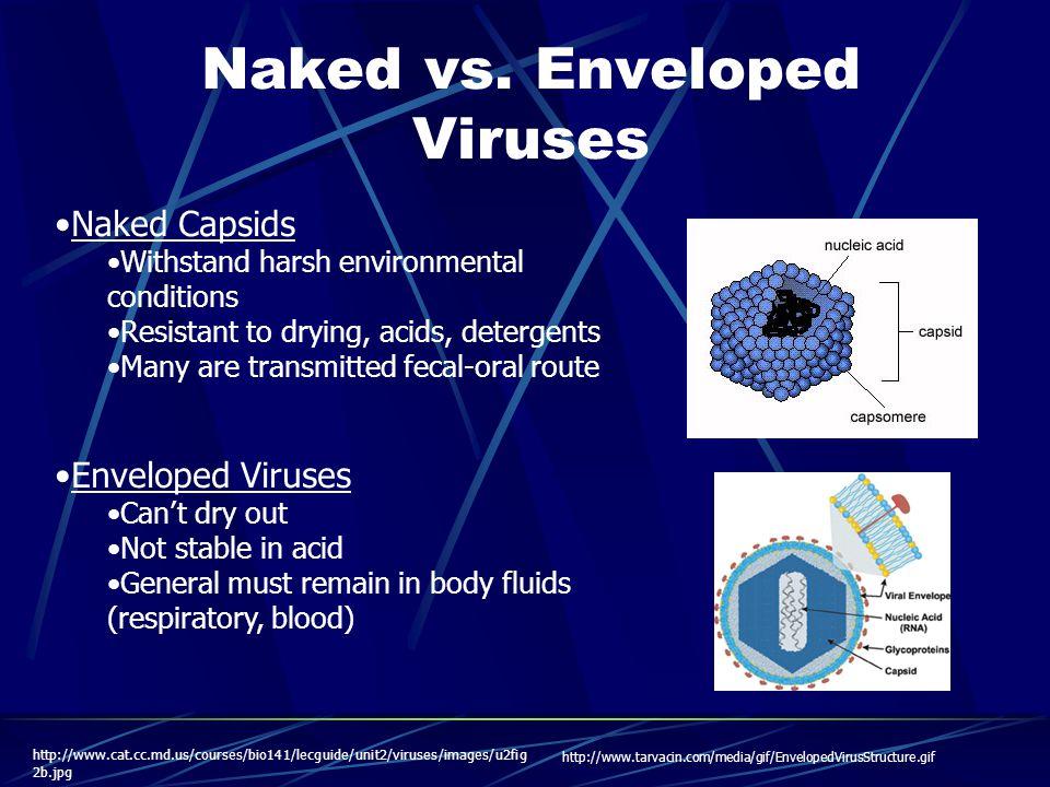 Naked vs.