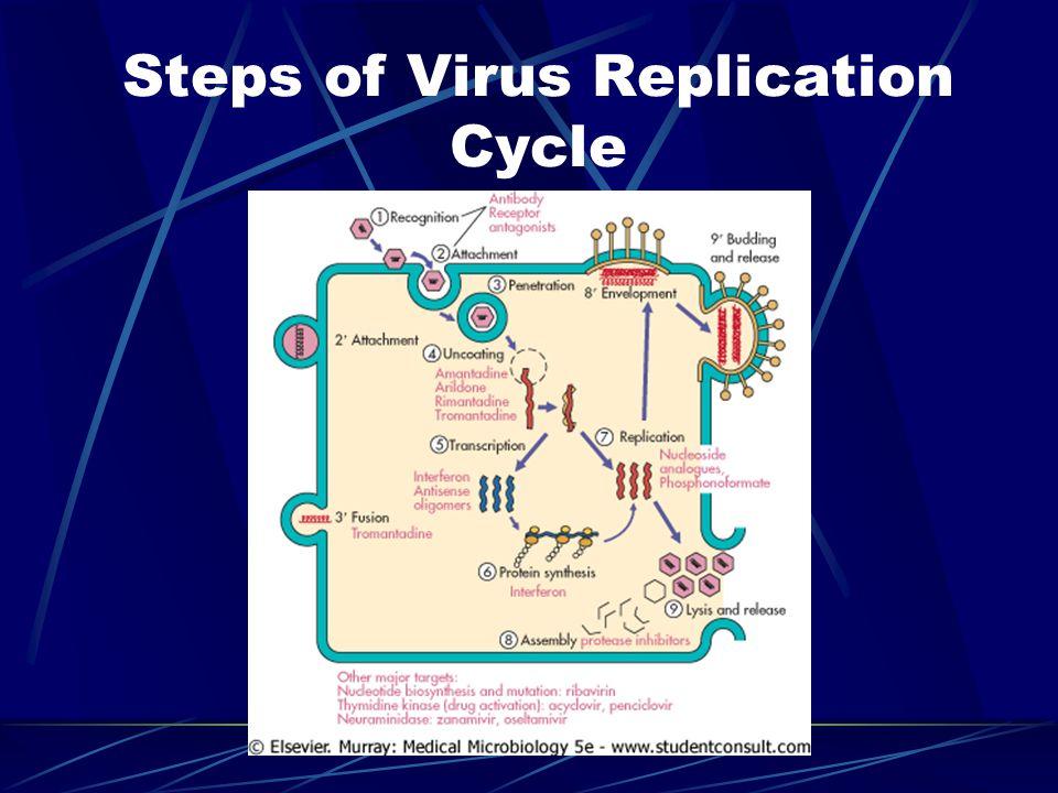 Steps of Virus Replication Cycle