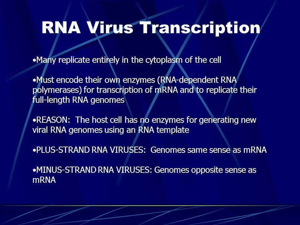 RNA Virus Transcription Many replicate entirely in the cytoplasm of the cell Must encode their own enzymes (RNA-dependent RNA polymerases) for transcription of mRNA and to replicate their full-length RNA genomes REASON: The host cell has no enzymes for generating new viral RNA genomes using an RNA template PLUS-STRAND RNA VIRUSES: Genomes same sense as mRNA MINUS-STRAND RNA VIRUSES: Genomes opposite sense as mRNA